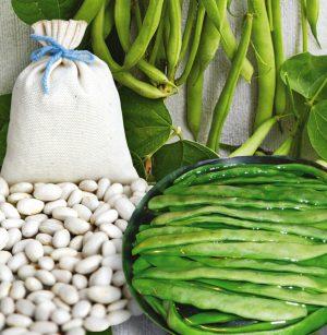 Семена фасоли спаржевой Маркони