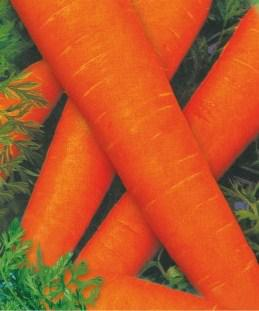 Семена моркови Флакко (имп)