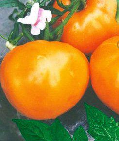 Семена томатов Апельсин