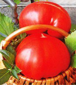 Семена томатов Бычий лоб