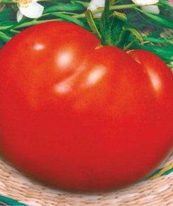 Семена томатов Король королей