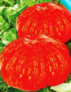 Семена томатов Феерверк