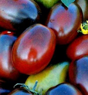 Семена томатов Черный мавр
