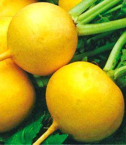 Семена редиса Злата оранжевая (имп)