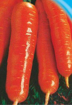 Семена моркови Долянка (имп)