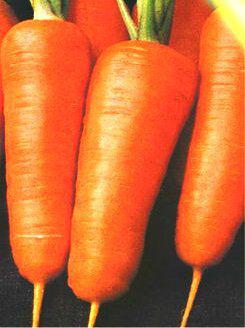 Семена моркови Каротель (Рэд кор)