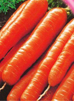 Семена моркови Коралл (имп)