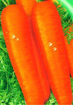 Семена моркови Перфекция (имп.)