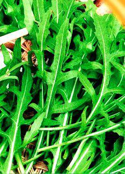 Семена салата Руккола