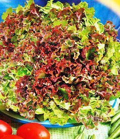 Семена салата Малиновый шар