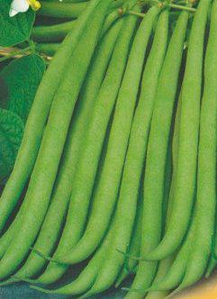 Семена фасоли спаржевой Настенька