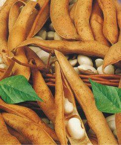 Семена фасоли кустовая зерновая Ласточка