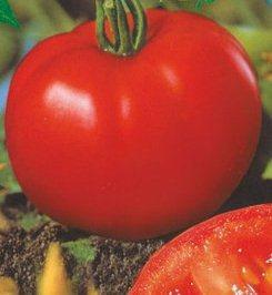 Семена томатов Гардемарины