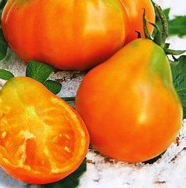 Семена томатов Янтарный трюфель