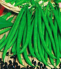 Семена фасоли Черный Агат