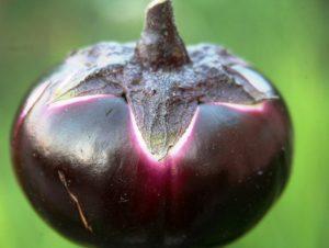 Семена баклажана Круглый фиолетовый тип Гелиос