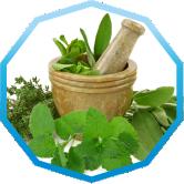 Семена салата Мизуна зеленый