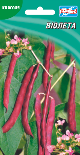 Семена фасоли вьющаяся спаржевая Виолетта 20 шт.