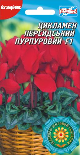 Цикламен Персидский Пурпурный F1 5 драже