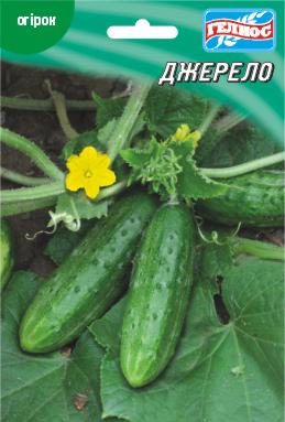Семена огурцов пчелоопыляемых Джерело F1 10 г