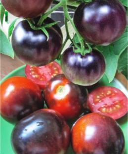 Семена томатов Блево