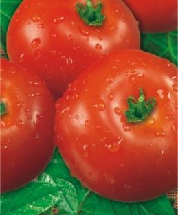 Семена томатов Волгоградский 323