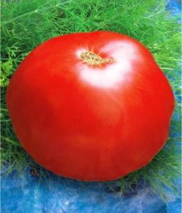 Семена томатов Алка