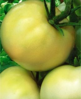 Семена томатов Белый гигант