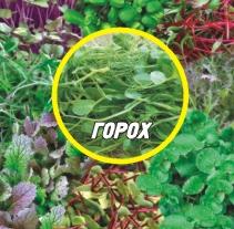 Семена Гороха для микрозелени