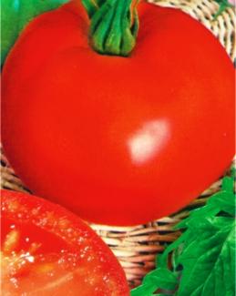Семена томатов Дар Заволжья красный