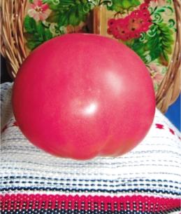 Семена томатов Волгоградский розовый