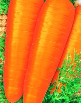Семена моркови Красная роза (имп.)