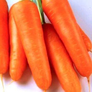 Семена моркови Талисман