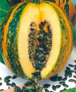 Семена тыквы Голосеменная  Южная
