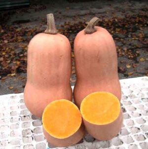 Семена тыквы Баттернат