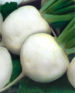 Семена редьки Дайкон Саша (Імп.)