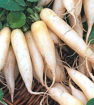 Семена редиса Белоснежка