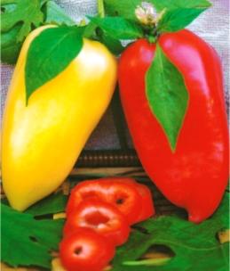 Семена перца Айвенго