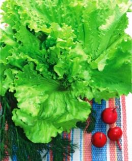 Семена салата Снежинка