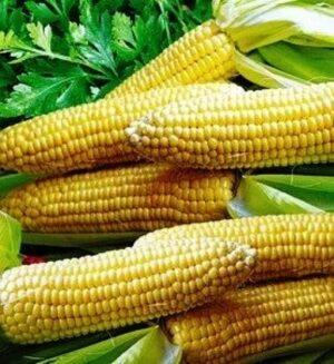 Семена кукурузы сахарной Багратион